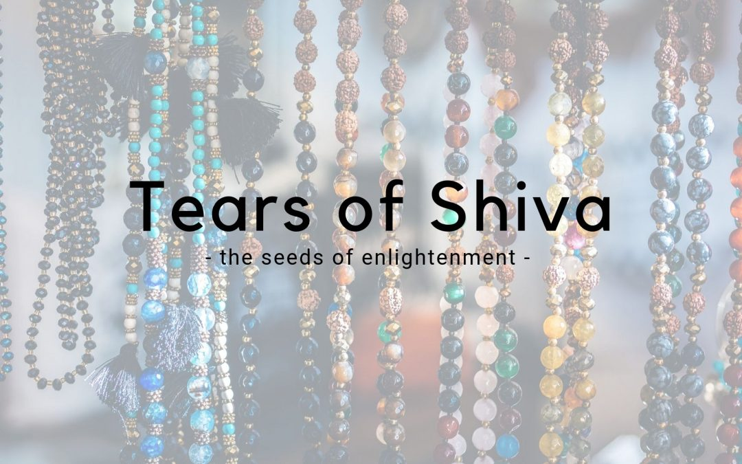 The Tears of Shiva – Rudraksha